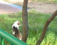 シャイな猫2.JPG