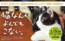 猫なんかP2.jpg