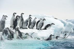 皇帝ペンギンただいま4.jpg