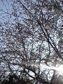 201803の桜.JPG