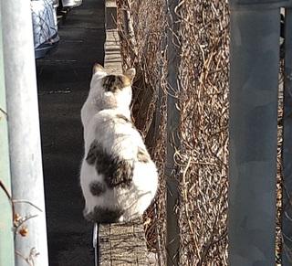 20210205朝に会ったネコ1.JPG