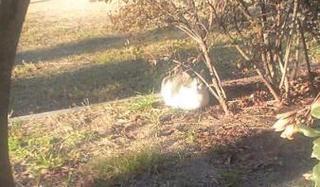 ネコ、日向ぼっこ中.JPG