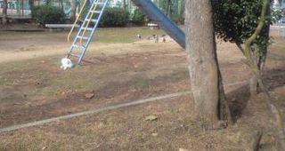 朝の公園.JPG