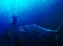 海底47m2.jpg