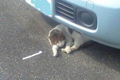 車の下のネコ.JPG