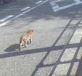 避ける猫2.JPG